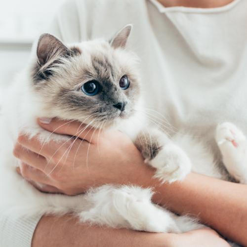 Arthroxan cat