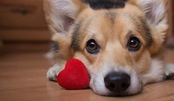 Cardio-light dog