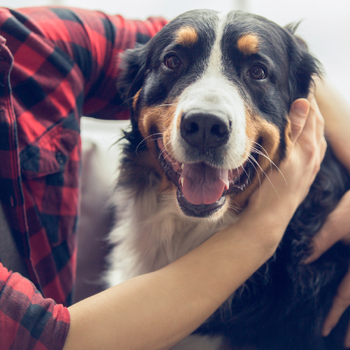 Immunoxan dog