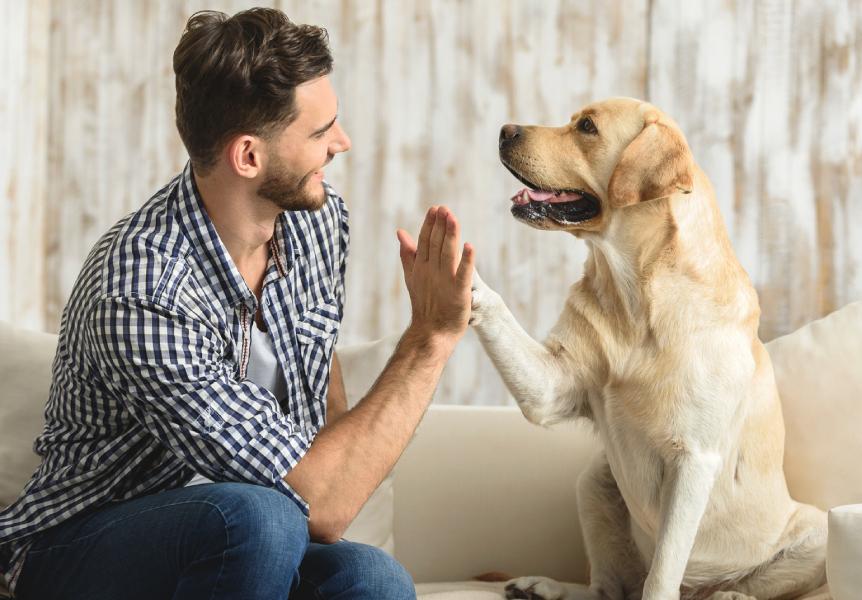 Jak szkolić psa
