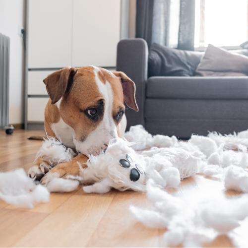 Jakie są przyczyny nadpobudliwości u psa?