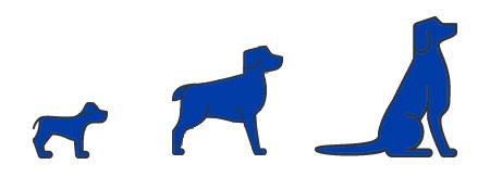 Periaxan dog