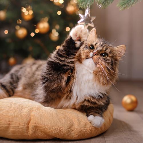 Stres u kota w sylwestra i święta